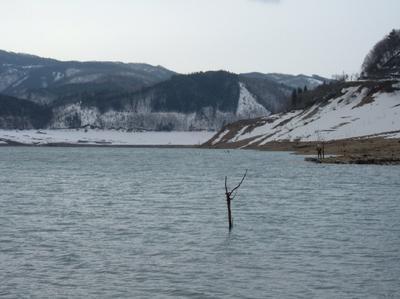ブログ用H180409御母衣湖桜下上流方面.JPG
