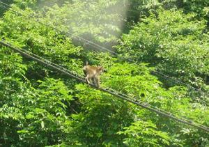 060806_1259_monkey.JPG